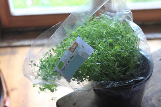 Thymian-Pflanze in Demeter-Qualität aus einer Supermarktkette